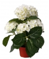 Kunst hortensia plant wit 36 cm
