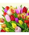 Servetten met tulpen 20 stuks